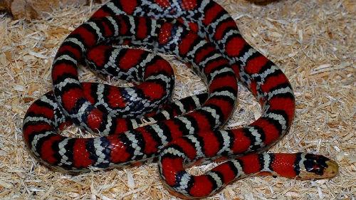 к чему снится убить ядовитую змею