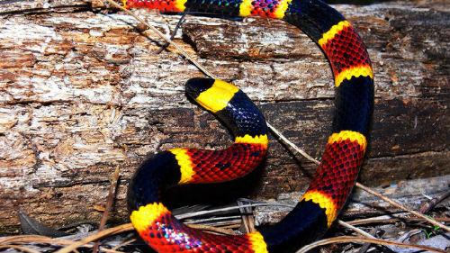 ползет ядовитая змея