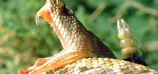 ядовитая змея нападает во сне