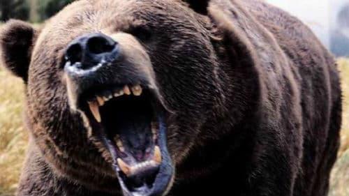 к чему снится что медведь гонится женщине