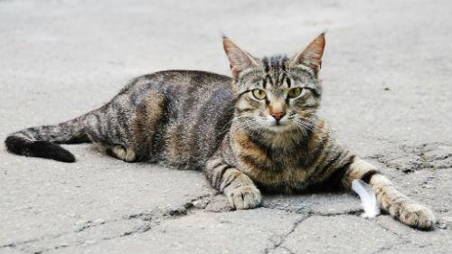 умершая кошка ожила