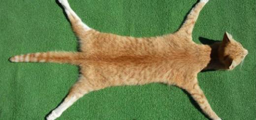 мертвая кошка во сне