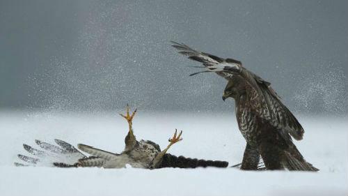 большая мертвая птица