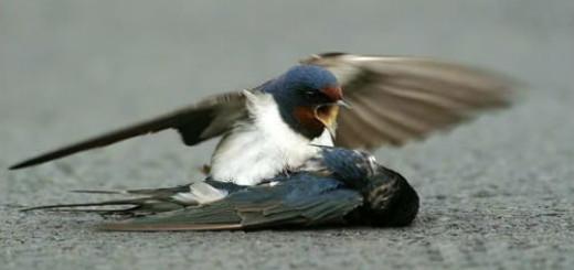 мертвая птица на земле