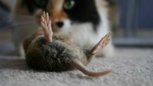 мертвые мыши во сне