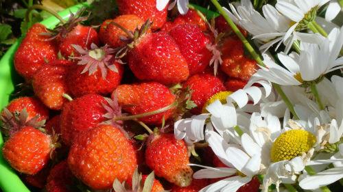 лунный календарь садовода огородника на июнь