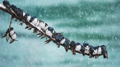 Картинки по запросу птица рождается на дереве