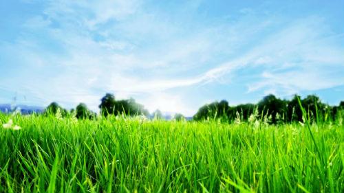 видеть траву во сне