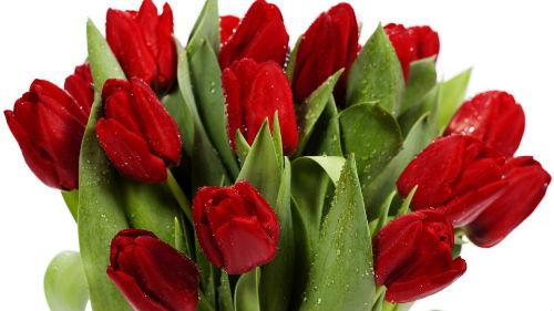 Сонник красные тюльпаны в подарок