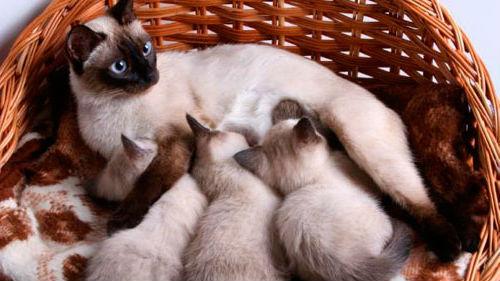 кошка рожает много
