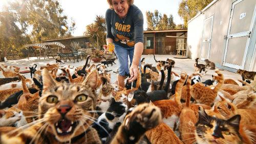 к чему снятся кошки много кошек женщине