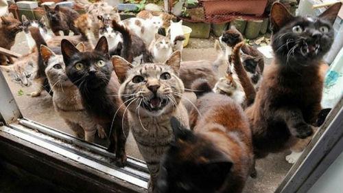 Снятся много котов в доме