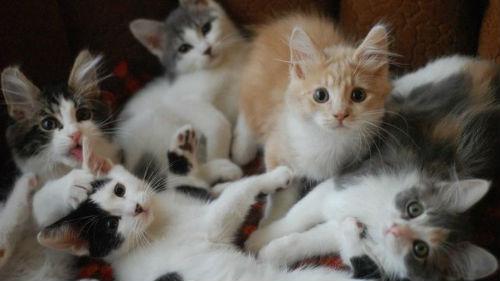 котята маленькие много разноцветные