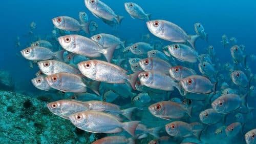 много рыбы в воде во сне