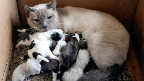 сон много родственников и знакомых
