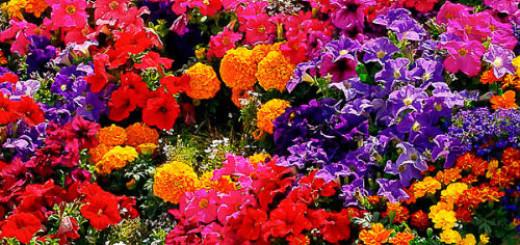 много разных цветов во сне