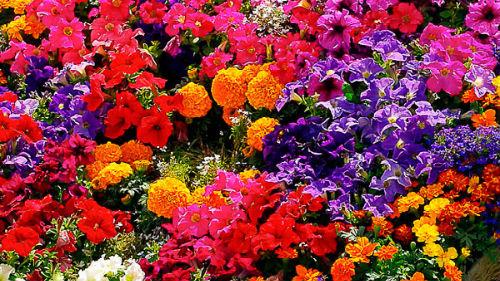 картинки много цветов
