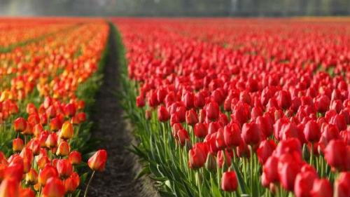 Фото много цветов