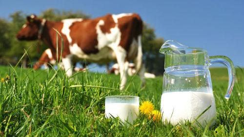 молоко в банке коровье