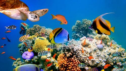 рыбы в море океане