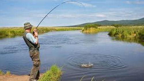 наблюдать как ловят рыбу