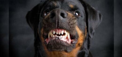 нападает собака во сне