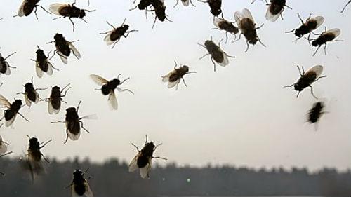 Сонник, мухи в руках