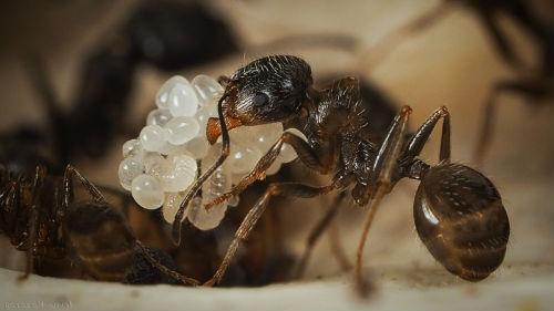 муравейник во сне