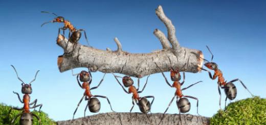 видеть муравьев во сне