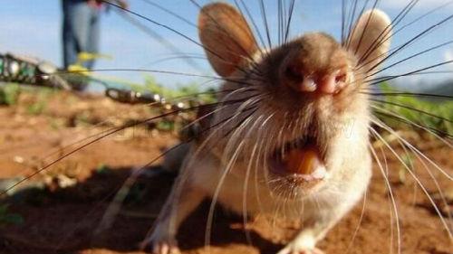 Если Ногу Во Сне Укусил Мышь