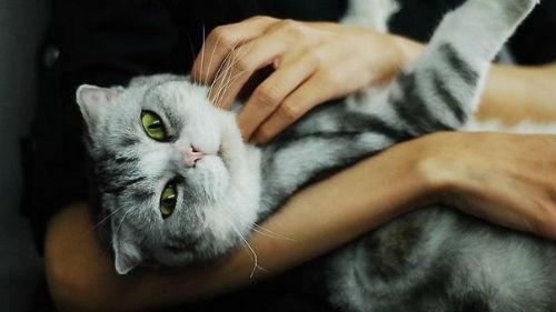 носить кота на руках