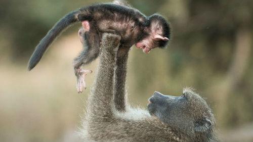 обезьяна с детенышем