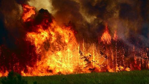 сильное пламя в лесу