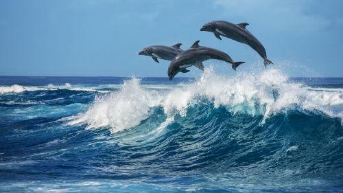 К чему снится плыть в океане