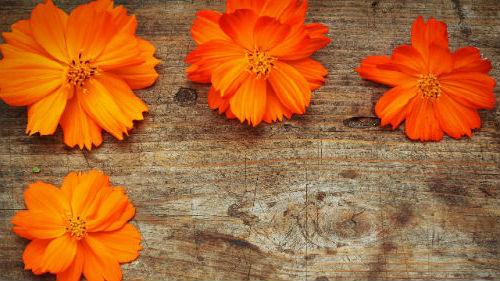 К чему снятся оранжевые цветы