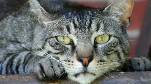 К чему сниться убить во сне кота