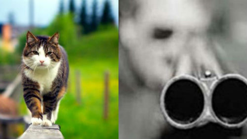 застрелить кота