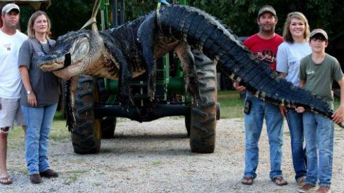 к чему снится убить крокодила женщине