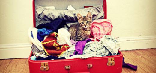 чемодан с вещами собранный во сне