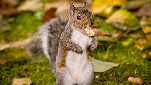 кушать орехи