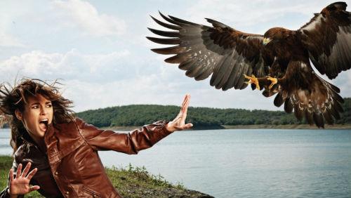 к чему снится орел нападает на меня