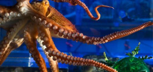 осьминог живой во сне
