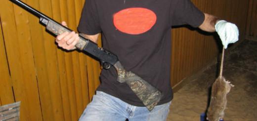 убить крысу в доме во сне