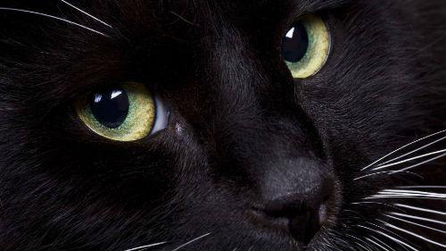 картинки с кошкой черной