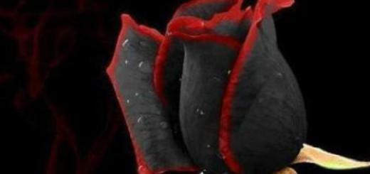 черная роза во сне