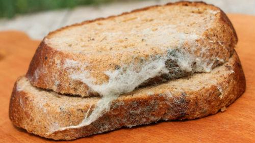 Сонник хлеб с плесенью во сне к чему снится хлеб с плесенью