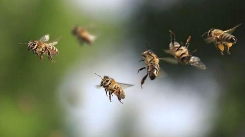 пчелы нападают