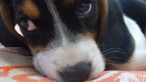 Сонник к чему снится давно умершая собака живой своему хозяину во сне