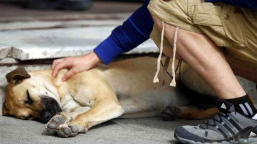 умирающий пес на руках