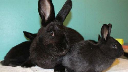 много кроликов и крольчат